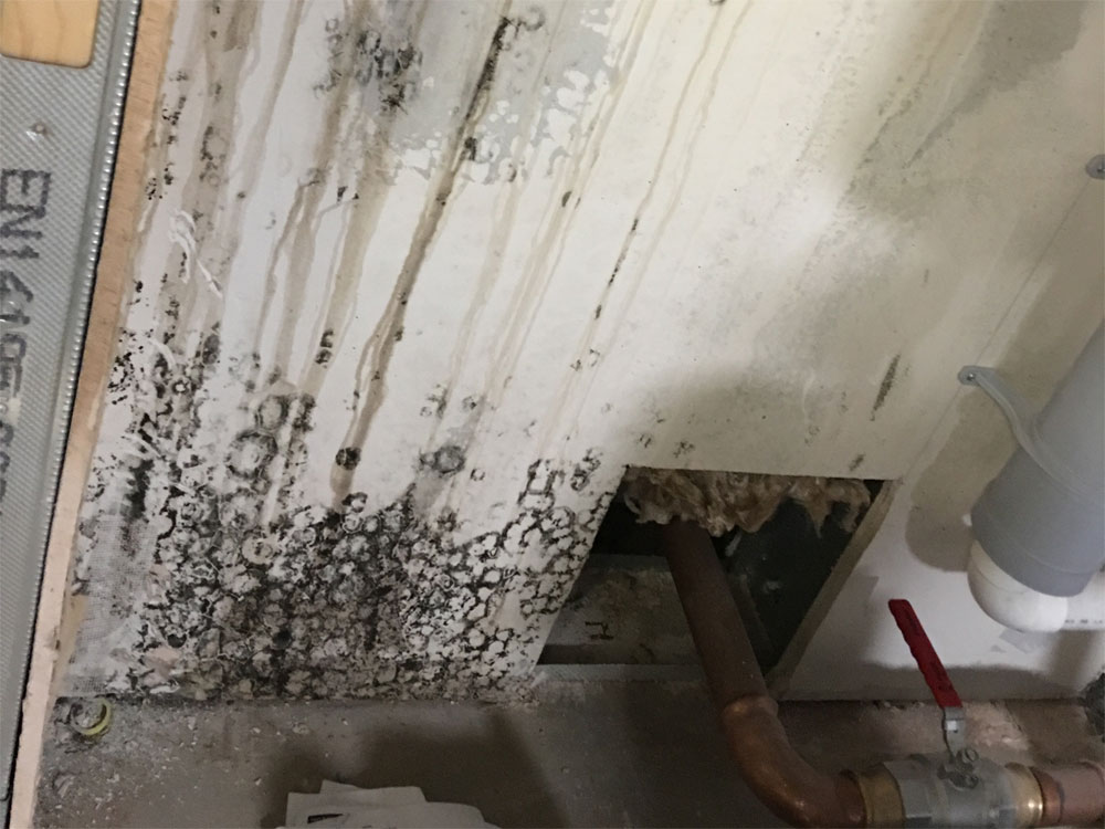 Mould growth in a services void in a multi-apartment building.  We remediated and dried the building so it didn't reappear
